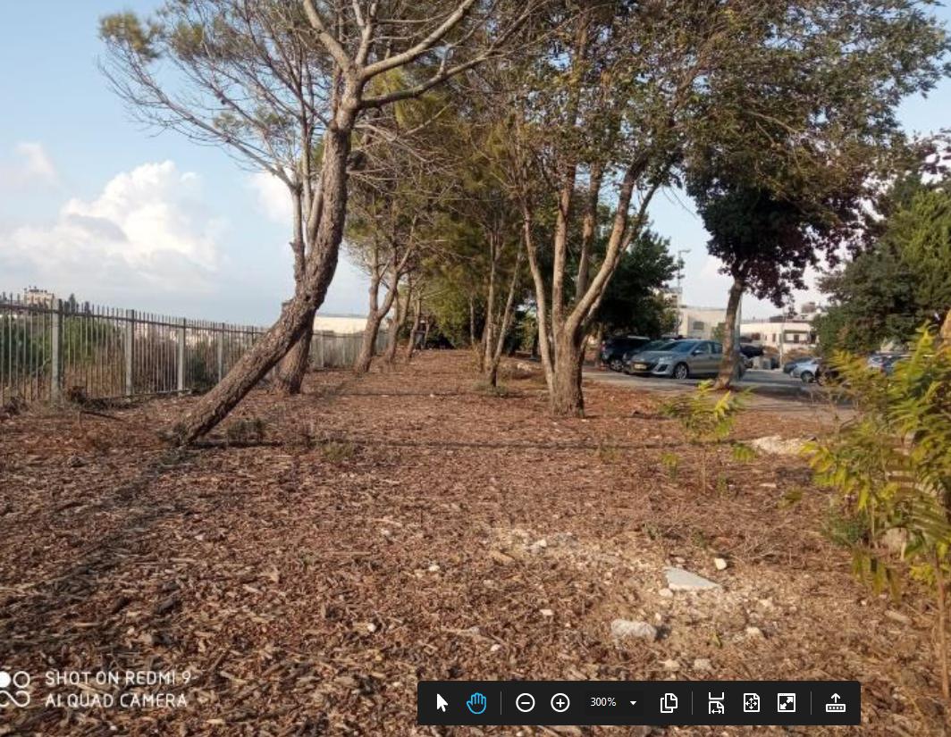 חורשה בקצה רחוב שמואל תמיר. נוף יפה ועצים.